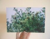 9 x 6 Pines Print