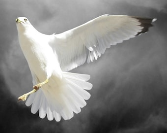 Witness,  Bird Art Print, Photography, Ring-billed Gull