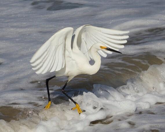 Animal Photography, Bird Photography, Beach Art, Snowy Egret, Bird Art Print, Fine Art Photography, Wave Jumping