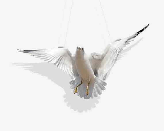 Animal Art, Animal Photography, Seagull, Ring-Billed Gull Photography Art Print, Home Decore, Wall Art, Fine Art Print, Swing