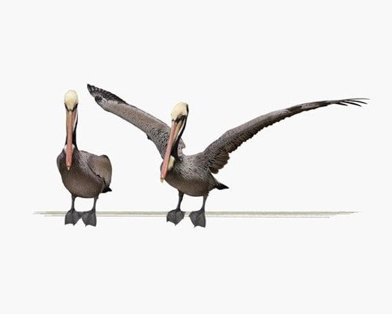 Animal Art, Bird Pelican Photography, Art Print, Children's Art, Wall Art, Home Decor, Fine Art Photography, Pelicans On A Line