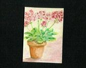 Geraniums - Original Watercolor Miniature- Free Shipping