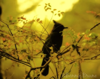 Bluejay on a Sunny Branch 8x10 Fine Art Photo Print - affordable home decor