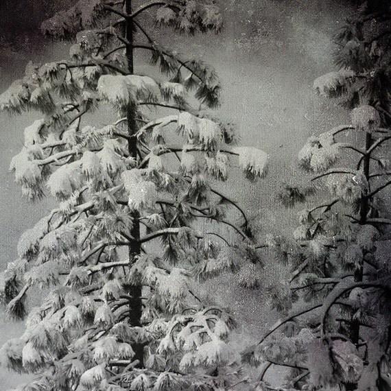 Winter Pines 12x12 Fine Art Photo Print