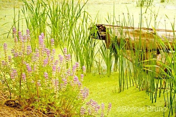 Nature Print Wildflowers Water Garden Photography Home