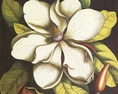 Wooden jigsaw puzzle. MAGNOLIA. Vintage botanical illustration brown green white. Wood, handcut, handcrafted, collectible. Bella Puzzles.