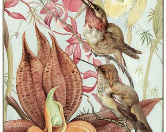 Wooden jigsaw puzzle. HUMMINGBIRDS & ORCHIDS. Edward J Detmold. Botanical print. Wood, handcut, handcrafted, collectible. Bella Puzzles.