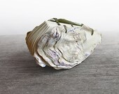 Oyster No. 2 - Handstitched Oyster Book Sculpture