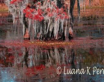 Louisiana Autumn Swamps