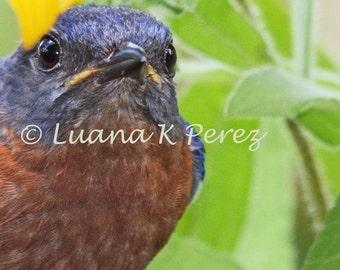 Bluebird Photo - Billy Bluebird