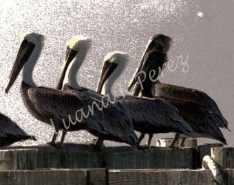Pelican Photo Artistic