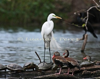 Egret and Turtles - Bayou Friends Forever