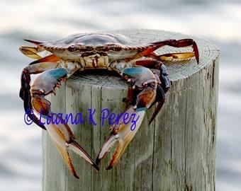 Crab Photography