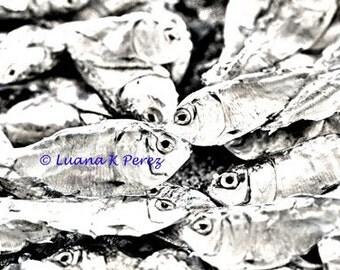 Dead Fish Photo - Black and White Artistic