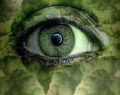 Eye of Mother Nature 8x10 Glossy Print