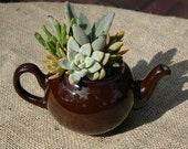 Succulent Dish Garden in Recycled Teapot