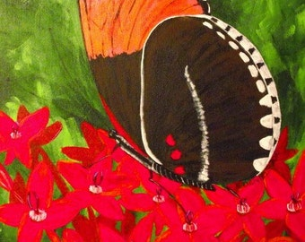 Butterfly on Red Flowers
