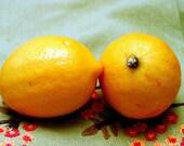 Soy Tart Candle Melts..6oz..Lemon Drop soy square melts