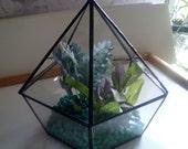 Glass Terrarium Geometric Pentagon Shape Bowl Planter Dish