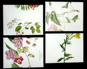 1933 National Geographic Botanic Wildflowers  4 Repurposed Book Page Envelopes OOAK with Cards