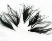 BLACK Ostrich Feather Sprays. Cruelty free DIY feathers for hair fascinators, boutonnieres and millinery (5 Sprays)