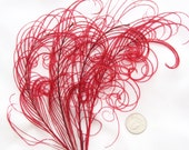 RUBY RED Peacock curled feather sprigs (5 -8 Inches)(4 or 12 SPRIGS)  plumes for hats,fascinators,costume headdress,brooch bouquet