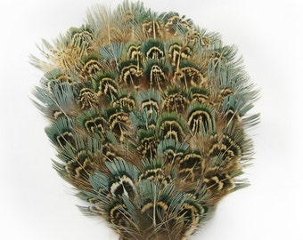 OASIS Blue Ringneck Feather Pad Applique. DIY craft item for millinery, masks, costumes, headdresses, headbands and hair clips (1 Appliqué)
