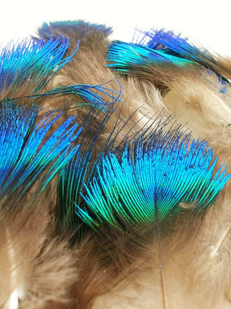 Small Blue and Green Peacock Scallop Plume Feathers for craft