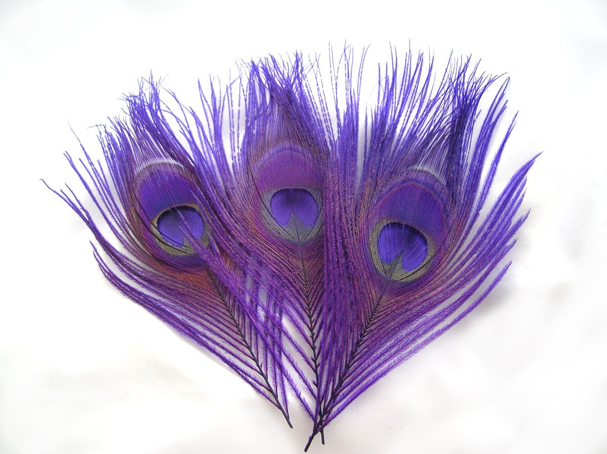 ROYAL PURPLE Peacock Feather Eyes 6 Piece2 size optionR