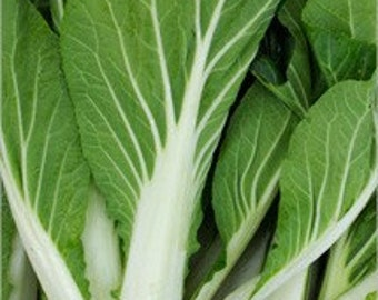 Bok Choy Chinese Cabbage