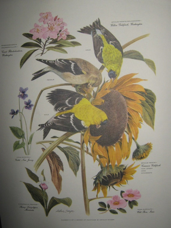 1957 Arthur Singer Bird Botanical Print Number 6 Of A Series