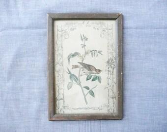 19th Century Audubon Bird Print
