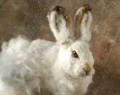 SALE Needle Felted Snow Hare