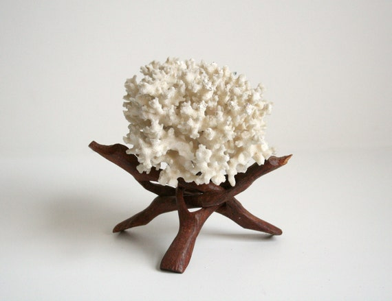Coral Specimen on a Wooden Stand