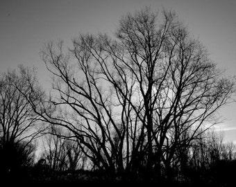 Photo Print -black and white photo print - A tree for Paula Dawn