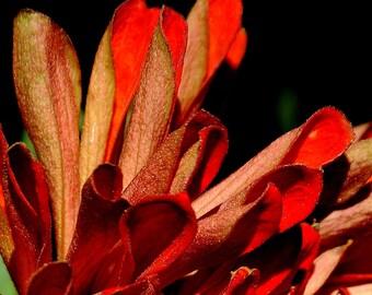 Photo Print - Petals in Orange - just the petals of an orange mum