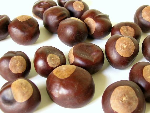 Lucky Buckeye Tree Seeds Nuts