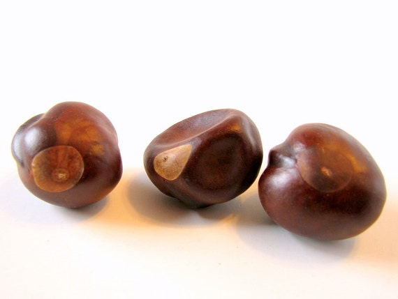Lucky number three buckeye nuts tree seeds by bytheinch on etsy