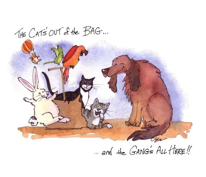 funny pets card animals birthday card dog cat bunny rabbit, Birthday card