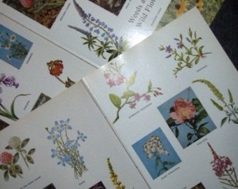 vintage paper ... WEEDS and WILD FLOWERS ...