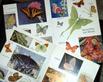 vintage paper ... BUTTERFLIES and MOTHS ...