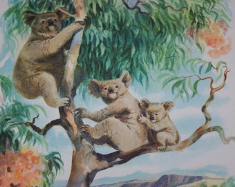 Water Color Print of Koalas