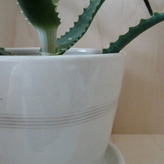 Porcelain Planter with Attached Tray and Drainage Hole-small