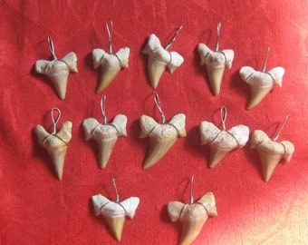Wholesale lot of 12  Medium Wire Wrapped Morrocan Fossil Sharks Teeth