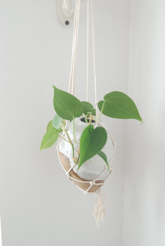 Hanging vase with sea shell - Bird nest