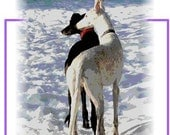 Greyhounds, Whippets, Dogs, set of 4 note cards with sentiment.