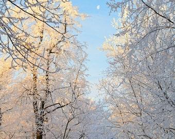 Winter Lane, 8x12 Fine Art Photograph (G1690)