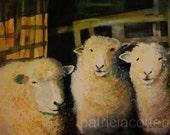Three sheep. Watercolor print