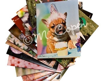 French Bulldog Note Cards - French Bulldog Greeting Cards - Assorted set of 12 Cards - Assorted French Bulldog Puppy Cards