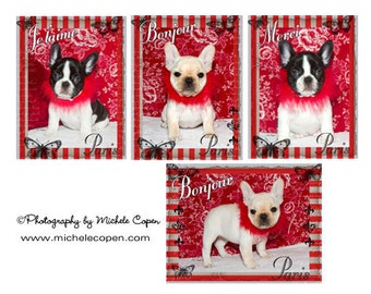 The Paris Collection - French Bulldog  Greeting Cards, 4 Pack